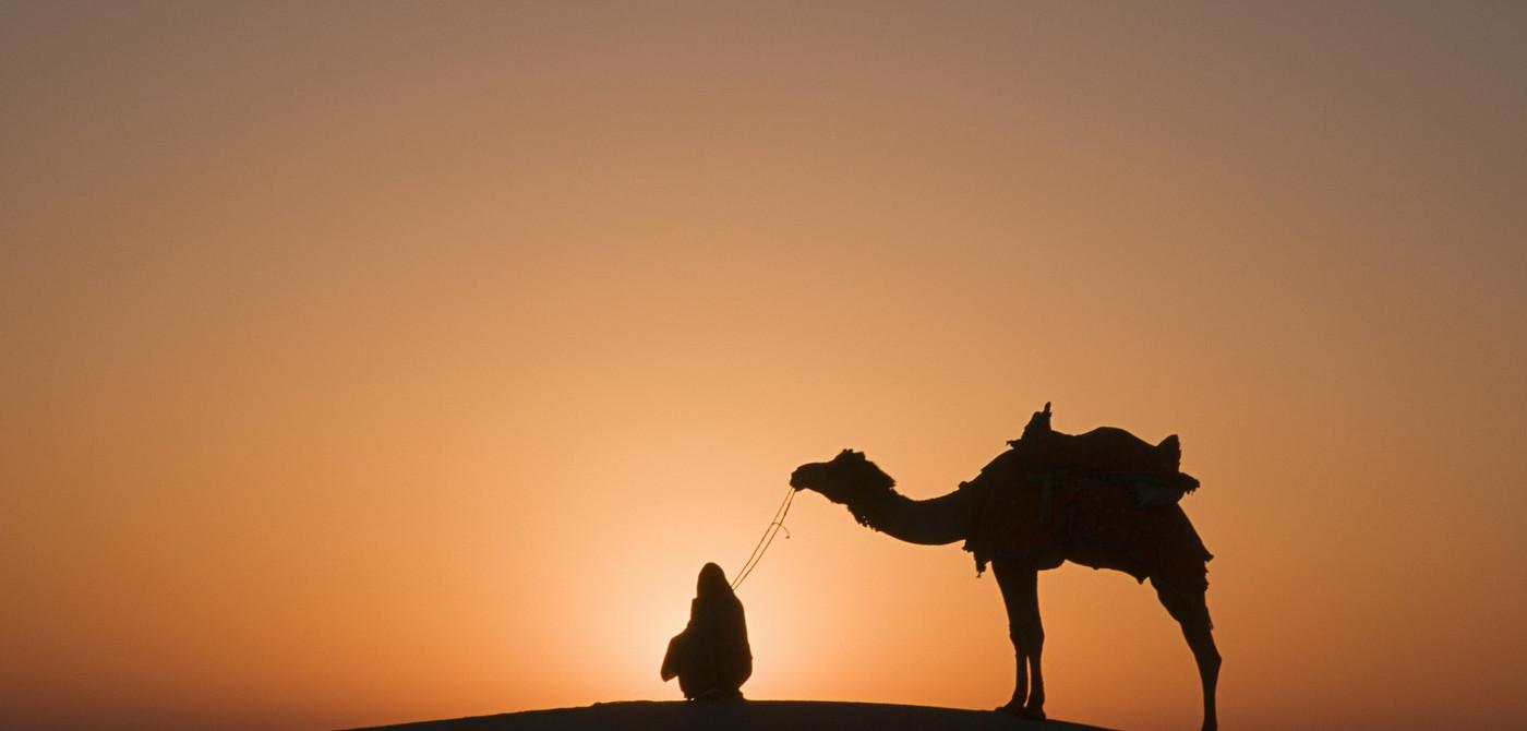 Jaisalmer-Camels