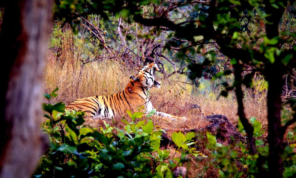 Bandhavgarh National Park.