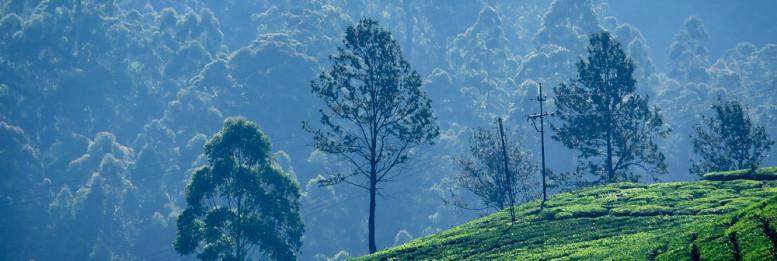 Kerala Munnar