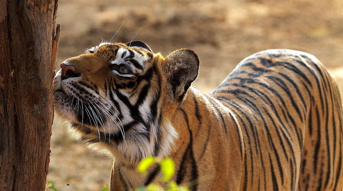 Wildlife Tours India